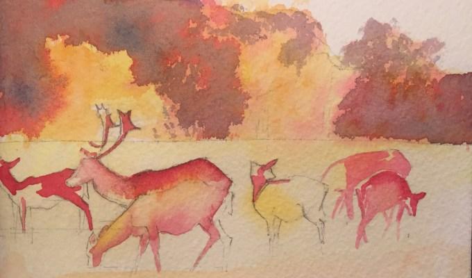 Deer, November