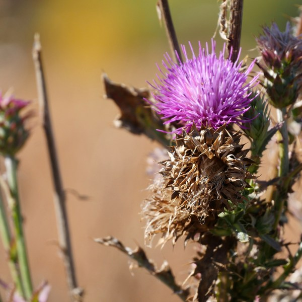 Photos of autumn wildflowers and fall foliage in Colorado