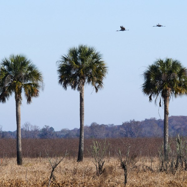 Winter Photos from Paynes Prairie State Park (Florida)