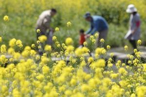 除草剤おすすめ8選【人気売れ筋・顆粒や粒剤種類・畑や庭で使える】