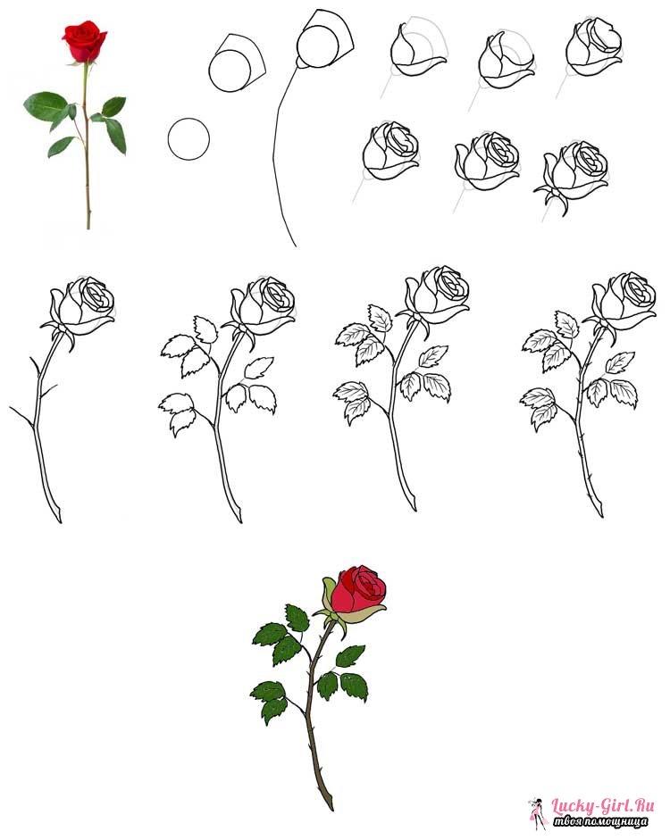 как нарисовать цветы открытки поэтапно избили своих оппонентов