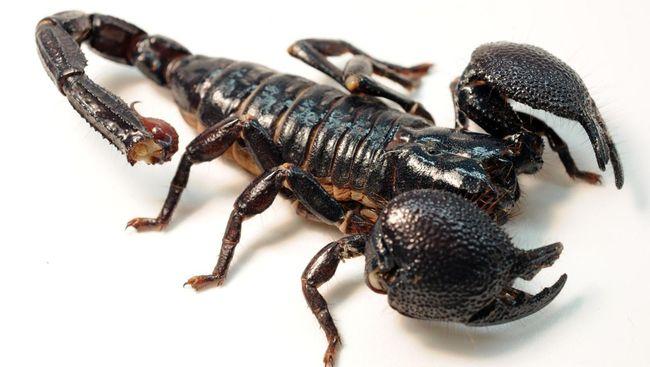 Camilan Serangga Yang Populer Di Dunia