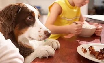 Dogs Behaving Better!Building Impulse Control