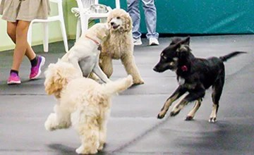 Ideal Puppy Training & Socialization