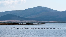 Sardinien Tag 8 (23)