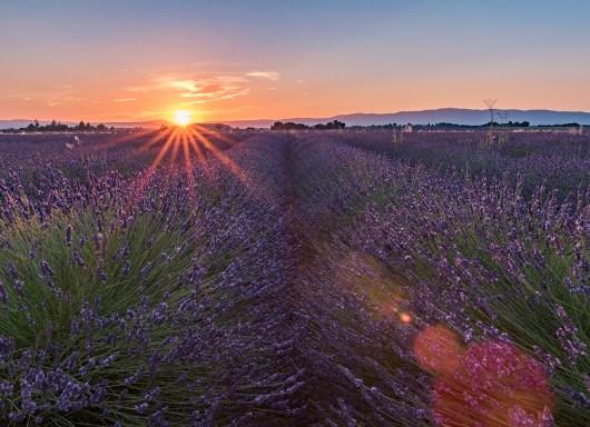 Saal Digital Lavendel_03