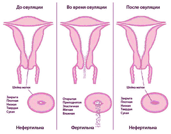 Выделения в картинках при зачатии