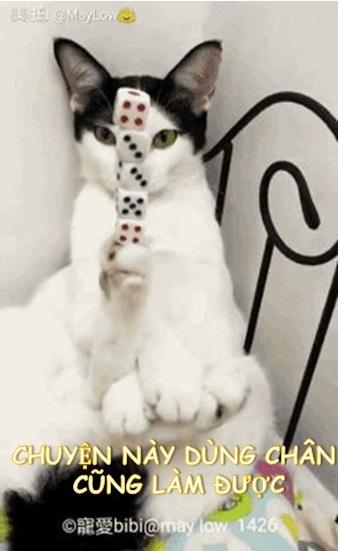 Chuyện này dùng chân cũng làm được - Meme Mèo