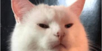 Trẫm không quen ngươi - Meme Mèo
