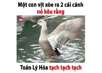 lucloi.vn_Một con vịt xòe ra hai cái cánh. Nó kêu rằng: