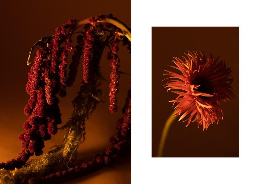 Floral Stills