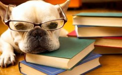 To Study Or Not To Study Funny Dog