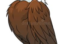 Download Proud Eagle Stock Vector Il Ration Of Bald Humor