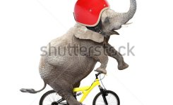 Funny Elephant With Protective Helmet Riding A Bike Safety And Insurance Concept