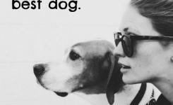 Best Heart Melting Dog Quotes With Beautiful Images Fallinpets Facts About Dogsfunny