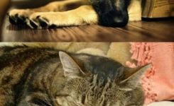 How A Dog Looks After Doing Something Bad How A Cat Looks After Doing Something Funny Animal Quotesfunny