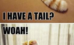 Fun Claw Funny Cats Funny Dogs Funny Animals Funny Animal Pictures With