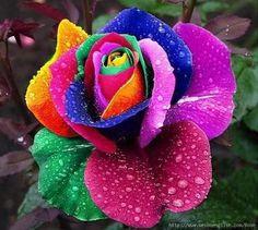 flower 2delete
