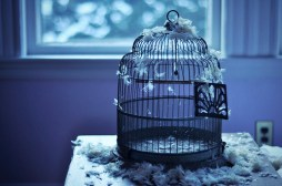 bird-cage-empty-feathers-fly-Favim.com-344475