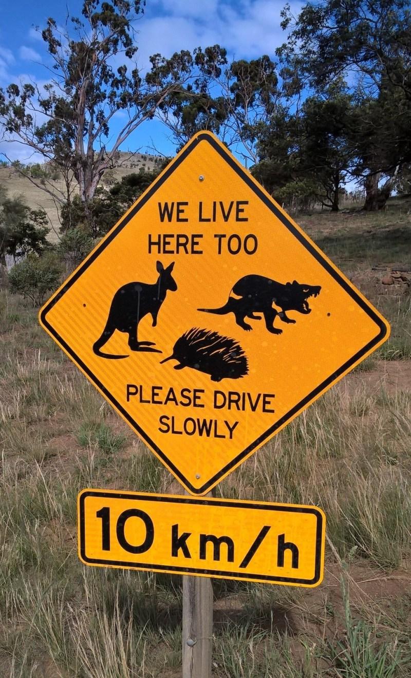 Segnale stradale australiano con canguro, echidna e diavolo della Tasmania