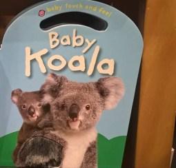 baby-koala.jpg