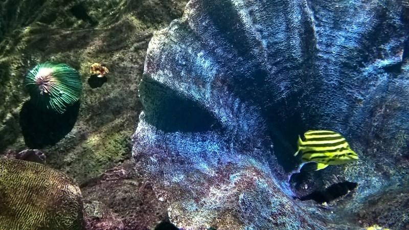 corallo con pesce giallo e nero a strisce