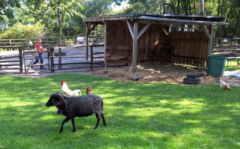 Fattoria comunale con galline e ariete nero