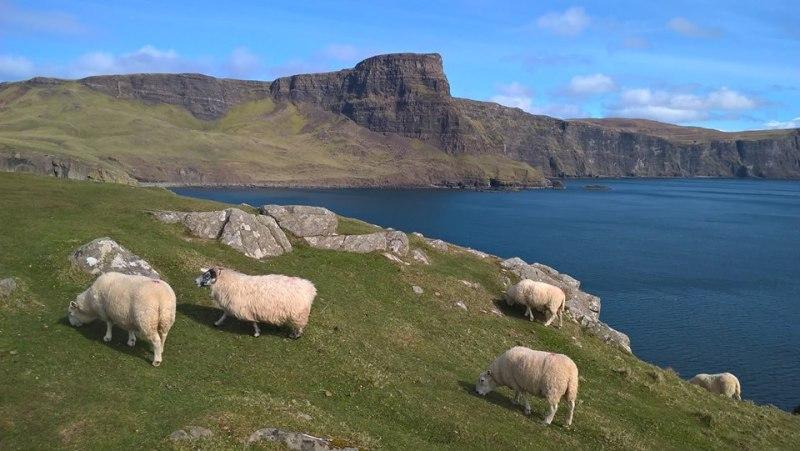 Paesaggio scozzese con un gregge in primo piano