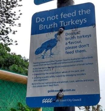 cartello di divieto di nutrire i brush turkey