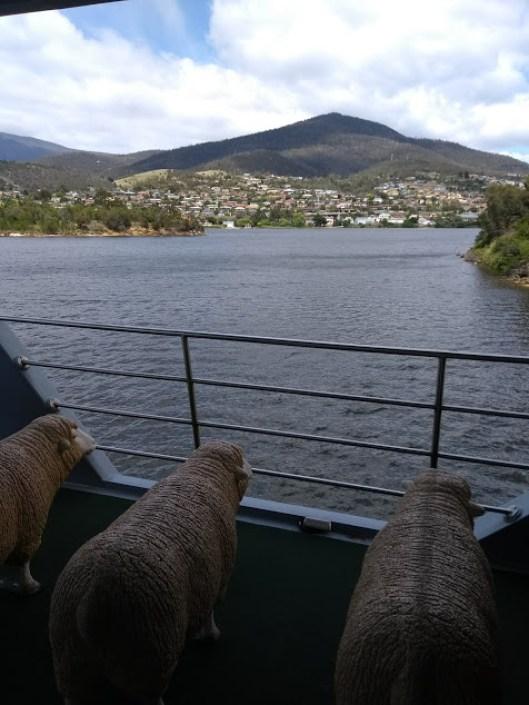 Sedili di un traghetto a forma di pecora merino