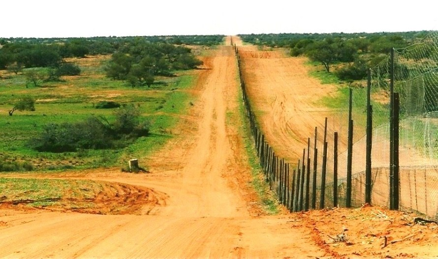 Sturt_National_Park3_-_Dingo_Fence_-_CameronsCorner