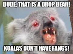 drop-bear-meme-il-koala-non-ha-le-zanne