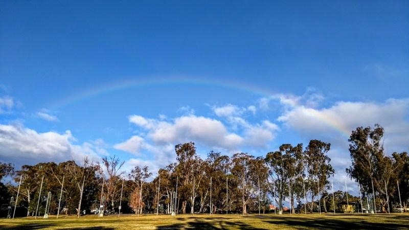 Canberra arcobaleno e alberi di eucalipto