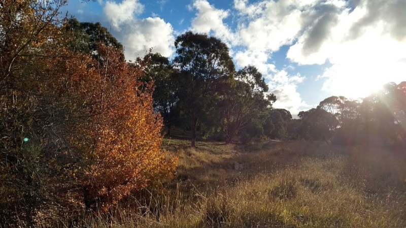 Canberra bush