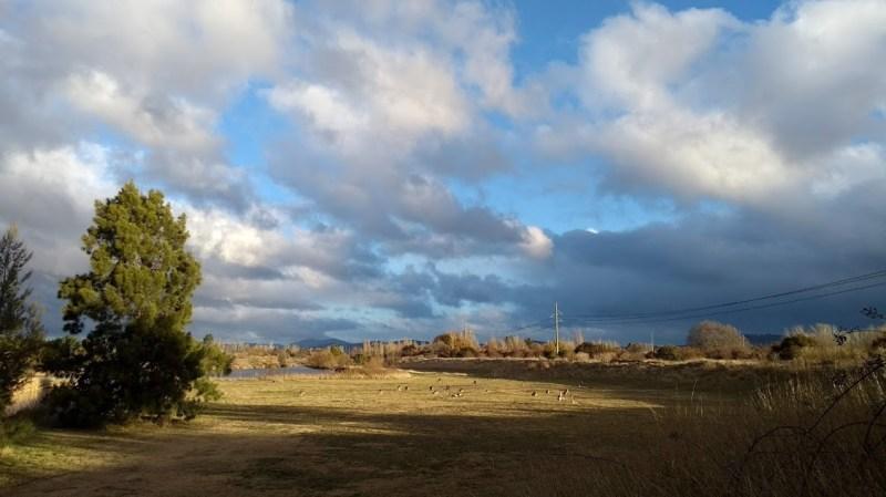 Canberra canguri da lontano
