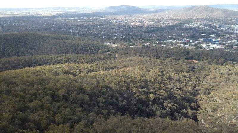 Canberra zona verde foresta
