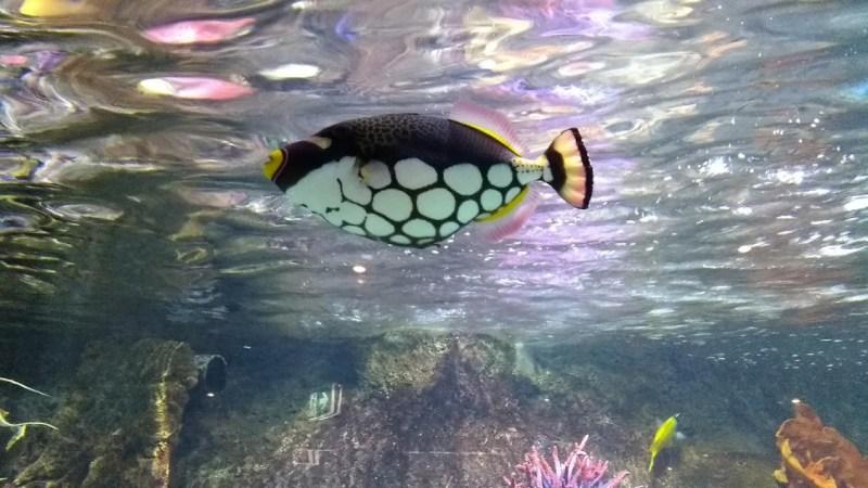 pesce tropicale colorato
