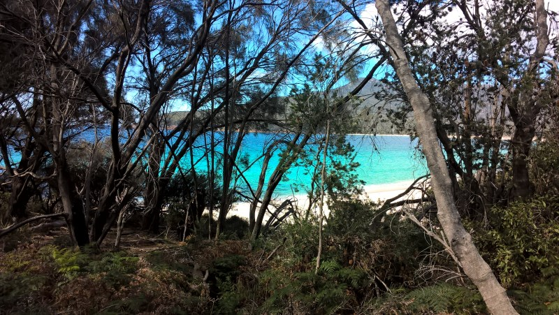 wineglass-bay-spiaggia-intravista-dal-bush