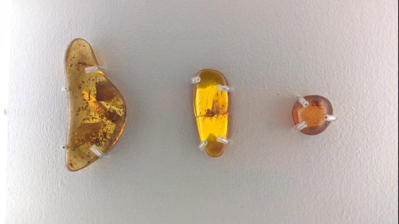 ragni-fossili-nell'ambra