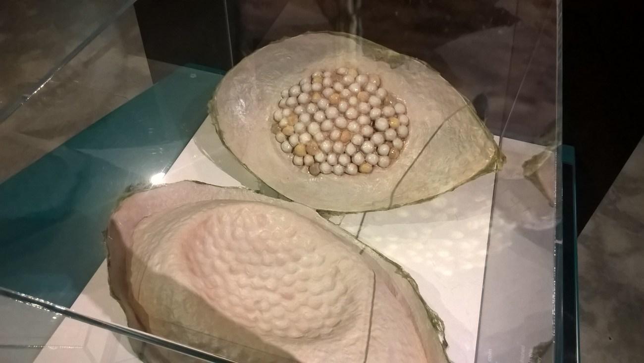 sacca-piena-di-uova-di-ragno-riproduzione