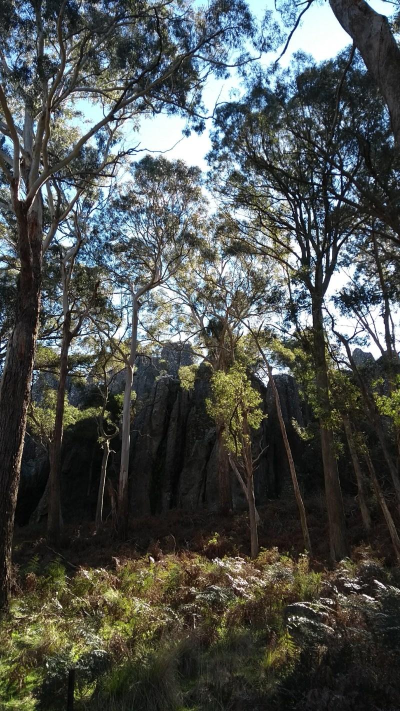 hanging rock rocce tra gli alberi