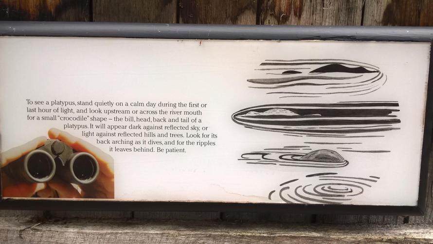 come trovare un ornitorinco