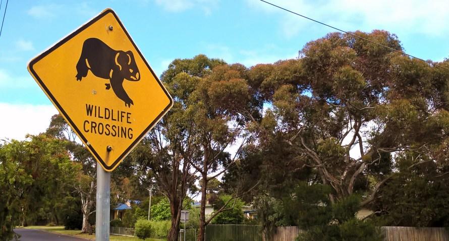 segnale stradale attraversamento koala