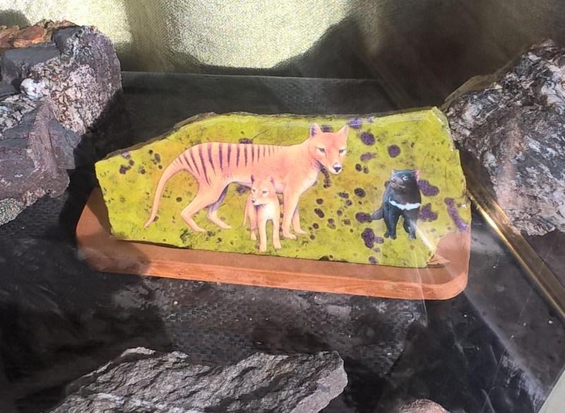 tilacino e diavolo della tasmania su mattonella