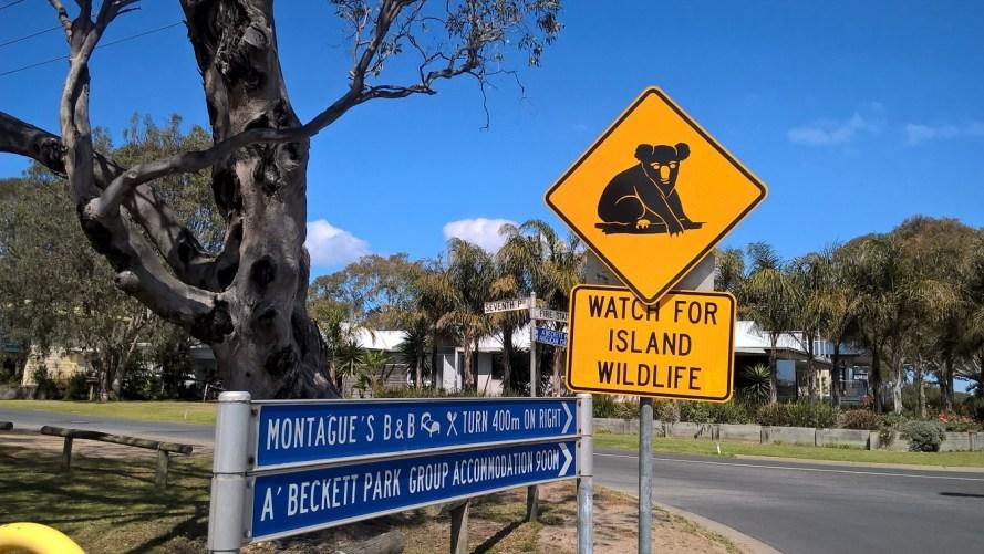 cartello koala raymond island attenzione alla fauna selvatica