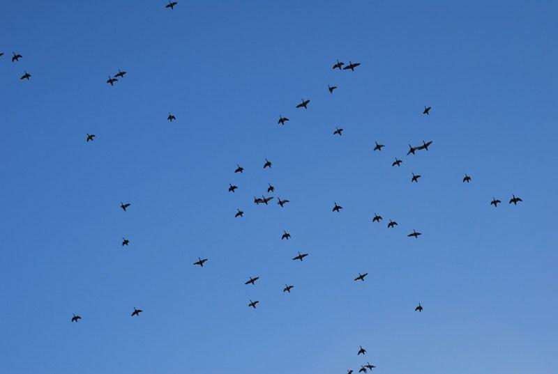 Poesia sul cielo: uccelli in volo nel cielo