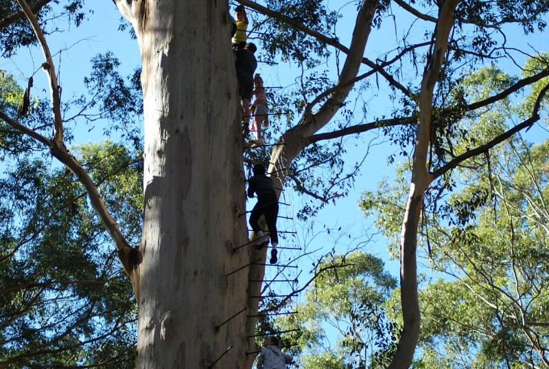 persone che salgono su un albero che ha i gradini