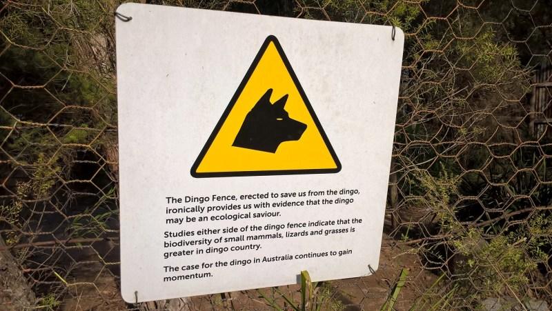 Paradossi della recinzione di contenimento anti-dingo