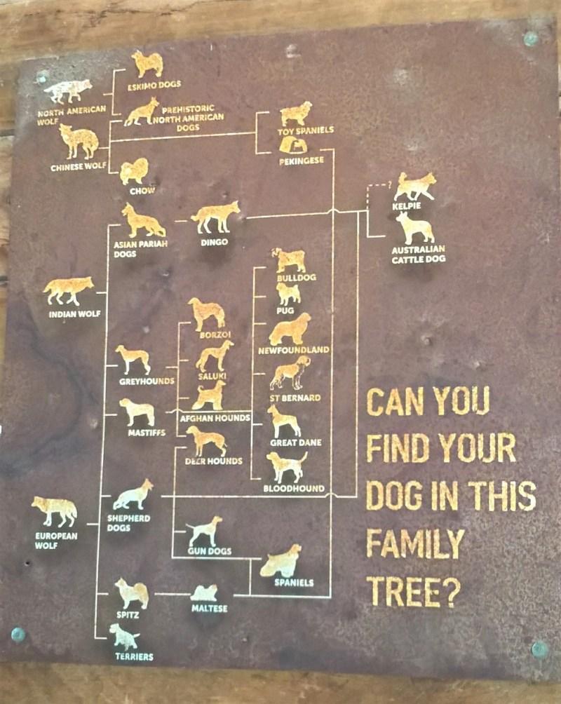 Origine del dingo: albero genealogico