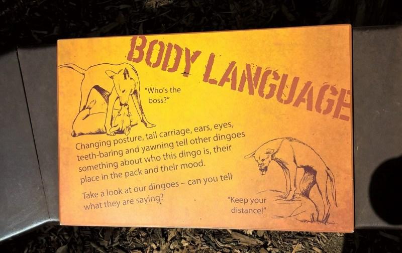 Dingo e linguaggio del corpo